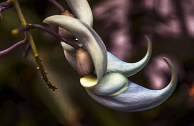 Flower Of A Jade Vine Poster
