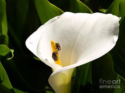Flower Pests Poster