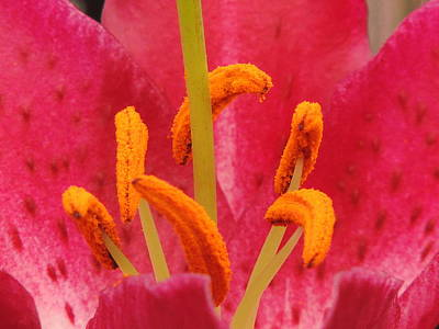 Flower Series Poster