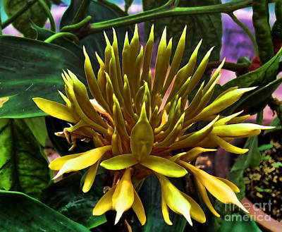 Flower - Sultry Dahlia - Luther Fine Art Poster by Luther Fine Art