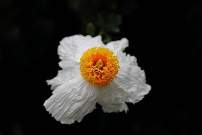 Flower Sunny Side Up Poster
