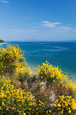 Flowering Broom At Coastal Landscape Poster by Panoramic Images