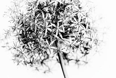Flowering Onion Poster by Elena Elisseeva