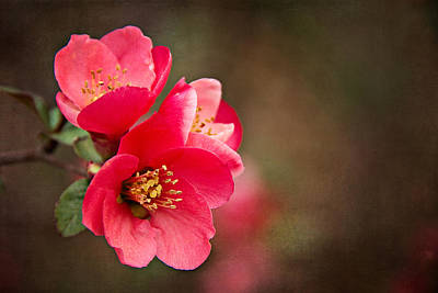 Poster featuring the digital art Flowering Quince by Lana Trussell