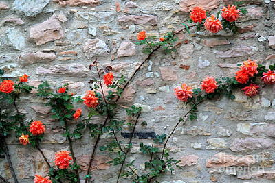 Poster featuring the photograph Flowers 5-assisi by Theresa Ramos-DuVon