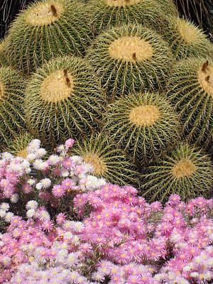 Flowers And Cacti Poster