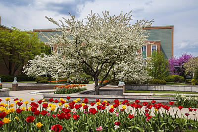 Flowers And Tree At Michigan State University  Poster