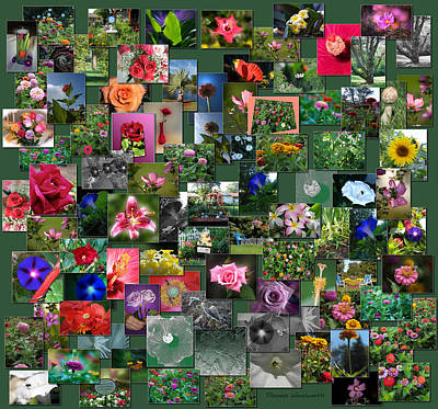 Flowers Collage Square Poster by Thomas Woolworth