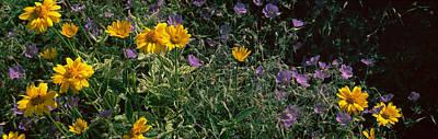 Flowers In A Botanical Garden, Buffalo Poster