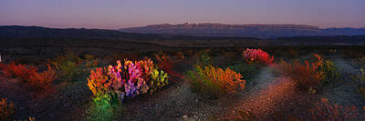Flowers In A Field, Big Bend National Poster by Panoramic Images