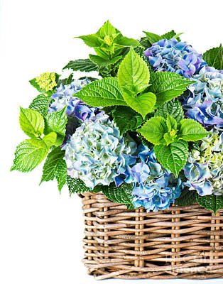 Flowers In Basket Poster by Boon Mee