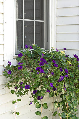 Flowers In Windowbox Poster