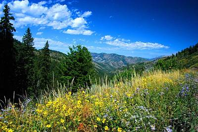 Flowers In Yellowstone Poster