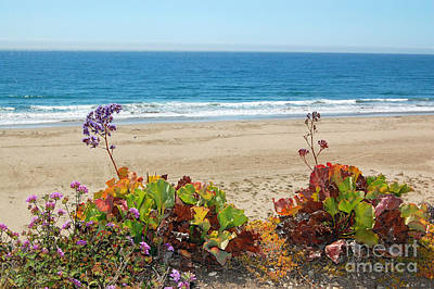 Poster featuring the photograph Flowers On Pismo Beach by Debra Thompson