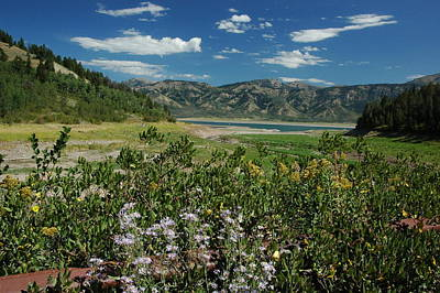 Flowers On The Palisades Resevoir Idaho Poster