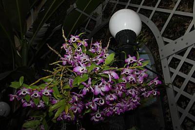 Flowers - Us Botanic Garden - 01138 Poster