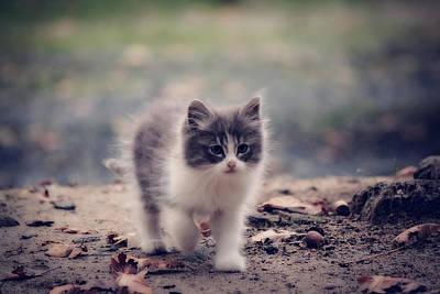 Fluffy Cuteness Poster