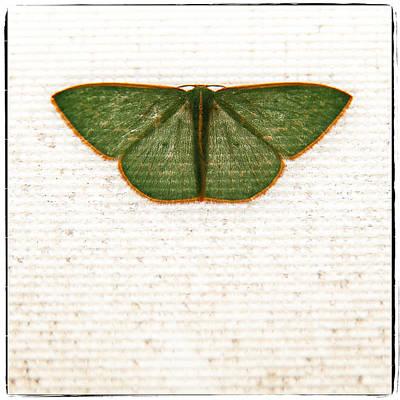 Flutter Poster by Tim Nichols
