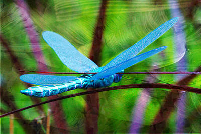 Fly Away With Me - Dragonfly  Poster by Marie Jamieson