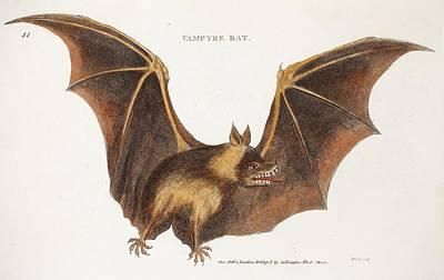 Flying Fox Fruit Bat Poster