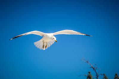 Flying Free Poster by Robert Palmeri
