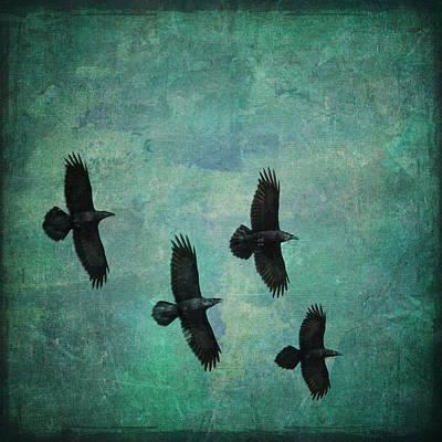 Poster featuring the photograph Flying Ravens by Peggy Collins