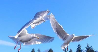 Poster featuring the photograph Flying Seagulls by Karen Molenaar Terrell