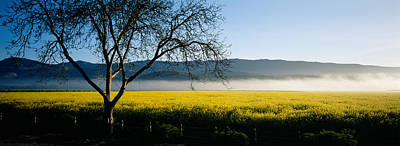 Fog Over Crops In A Field, Napa Valley Poster by Panoramic Images