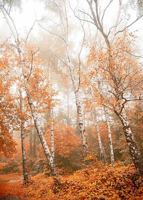 Foggy Autumn Aspens Poster
