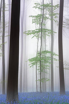 Foggy Forest .... Poster