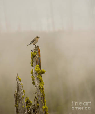 Foggy Friend Poster by Birches Photography