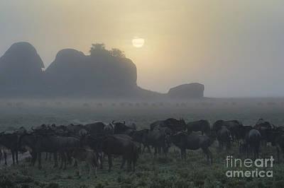 Foggy Morning - Serengeti Poster