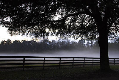 Foggy Pasture Poster by Kathy Ponce