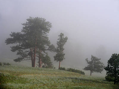Poster featuring the photograph Foggy Pines by Craig T Burgwardt