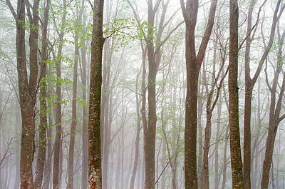 Foggy Trees In Forest Poster