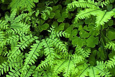 Foliage At Springtime Poster
