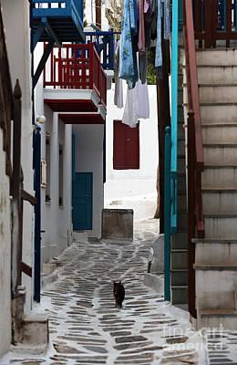 Follow The Cat In Mykonos Poster by John Rizzuto