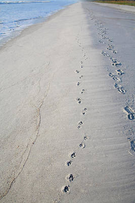 Footprints And Pawprints Poster