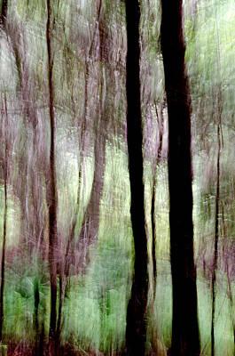 Forest Abstract Near Tantallon Nova Scotia Poster