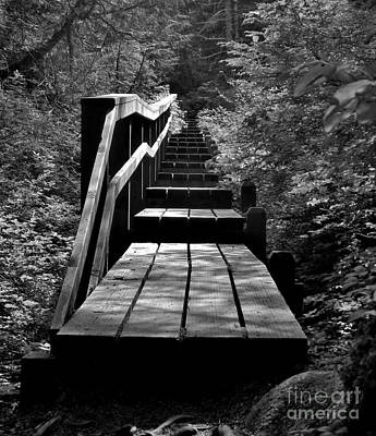 Poster featuring the photograph Forest Boardwalk by Laura  Wong-Rose