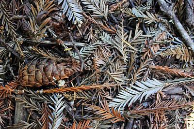 Forest Debris Poster