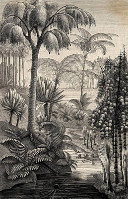 Forest During The Carboniferous Period Poster