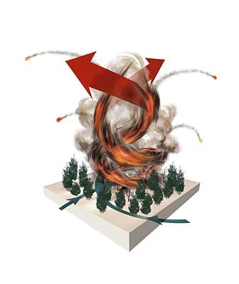 Forest Fire Tornado Poster by Mikkel Juul Jensen