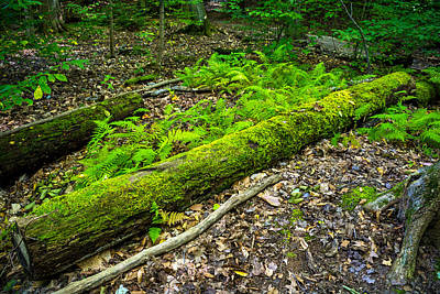 Forest Floor Gosnell Big Woods Poster by Tim Buisman