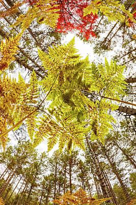 Forest Floor View Skyward Poster