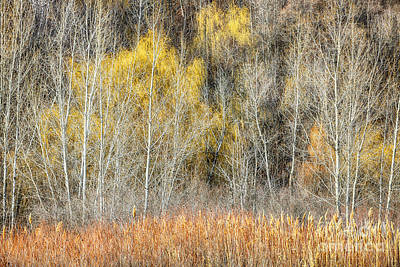 Forest In Late Fall At Scarborough Bluffs Poster