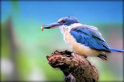 Forest Kingfisher With Breakfast Poster