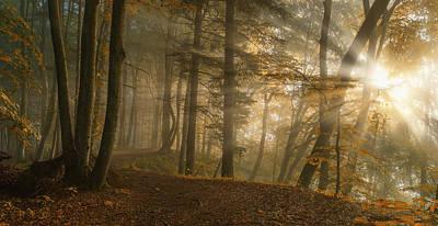 Forest Light Poster by Norbert Maier
