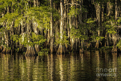 Forest On Caddo Lake Poster