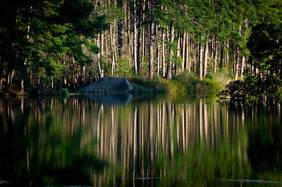 Forest Reflections Poster by Linda Unger